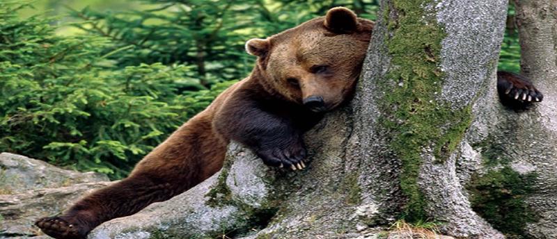 Νυμφαίο: Ξενάγηση στο δάσος των αρκούδων