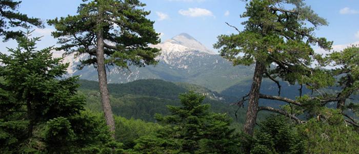 Δάσος της Βασιλικής: Ένα… αλπικό τοπίο