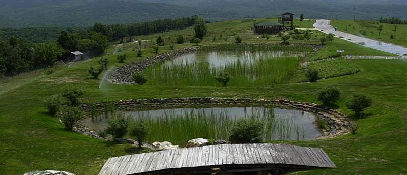Κιλκίς: Ανακαλύψτε τη χλωρίδα των Βαλκανίων!