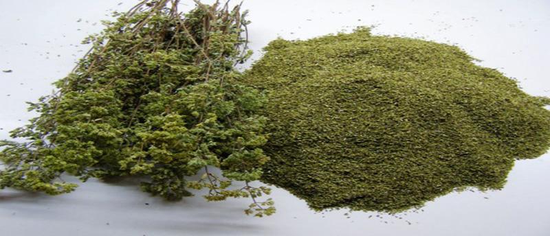 Ρίγανη: Το «άρωμα» της μεσογείου!