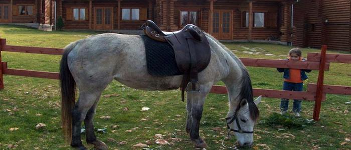 «Πέταλο Resort»: Χαλάρωση και ιππασία στο Φαλακρό Δράμας