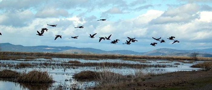 Δέλτα του Έβρου: Ένας «παράδεισος» σπάνιων πτηνών